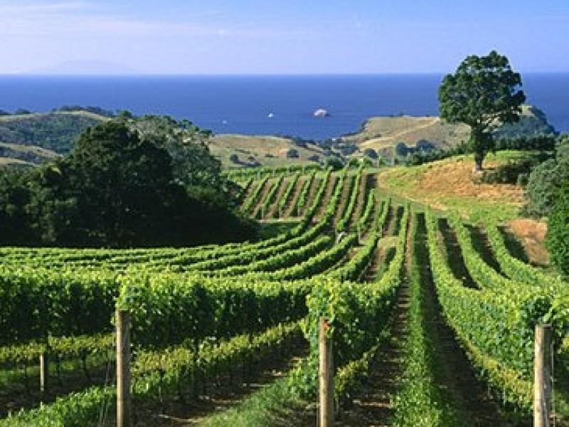 Waiheke Island Wine Tour Lt 56a